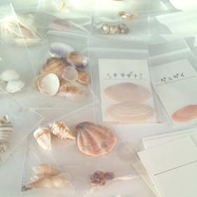 DSC_shells.JPG